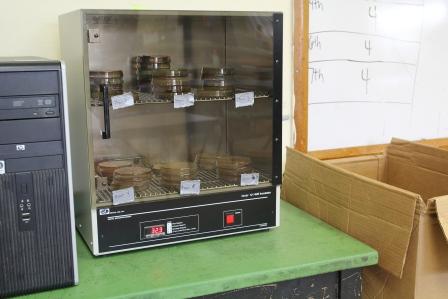 The bacteria incubator